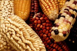 Food in Mesoamerica - Maize